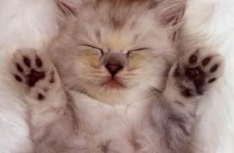 Ultimate Cutest Kittens Videos Ever On Youtube Compilation