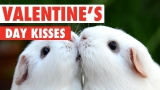 Valentine's Day Kissy Pets Love Is In The Air Video