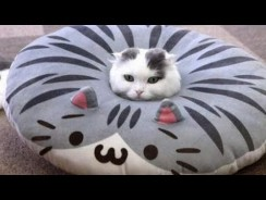 Very FUNNY CATS – Super HARD TRY NOT TO LAUGH challenge