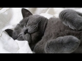 Waking up sleepy pets video