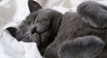 Waking up sleepy pets video