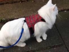 Walking A Cat
