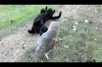 What A Hoot! Cat And Owl Are Best Buds