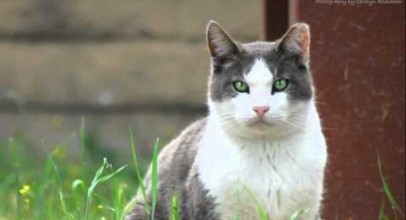 What To Do When You Find A Feral Or Stray Cat