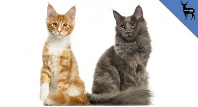 What's The Difference Between Feral and Stray Cats?