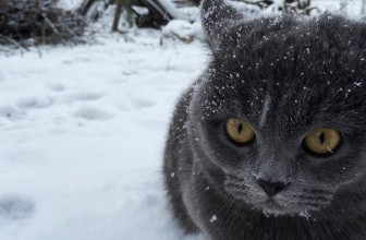 When Cat Sees Snow For The First Time