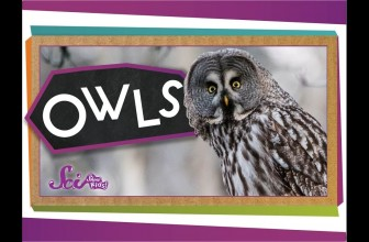 Who Knew? Amazing Owl Facts!