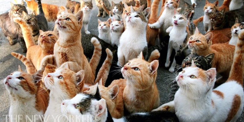 Why Humans Are Obsessed with Cats