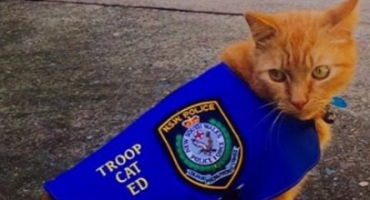 Why Police Hired a Cat Named Ed To Patrol This Area Instead of a K9 Officer