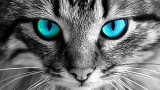 WHY YOU SHOULD NEVER LOOK INTO CATS EYES