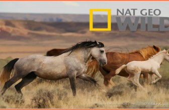Wild Horses as Native North American BBC Documentary Wildlife Animals