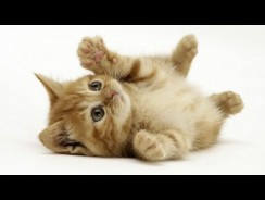Wonderful World Of Cats – Domestic Cats Documentary