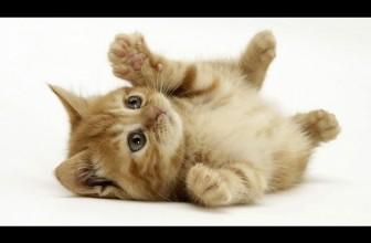 Wonderful World Of Cats – Domestic Cats Documentary