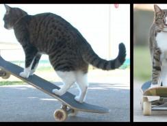 World's Best Skateboarding Cat! Go Didga Go!'