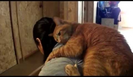 Worlds Most Lovable Cat