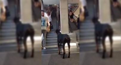 You Can't Believe How This Loyal Dog Waits For His Master