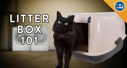 You're Setting Up Your Litter Box All Wrong